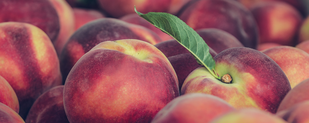 Peaches, recognisable for their smooth, velvety skin