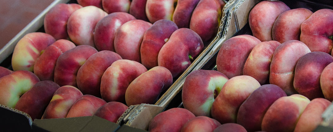 Saturn peach, with intense color that covers almost all degradation of pinks or reds